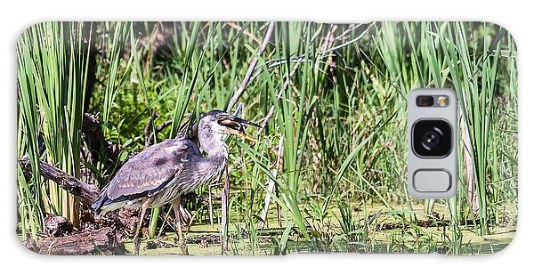 Great Blue Heron And Blue Gill Galaxy Case by Edward Peterson