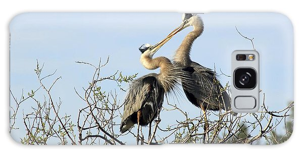 Great-blue Herons On Nest At The Venice Rookery, Florida Galaxy Case