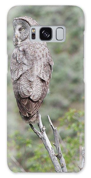 Great Gray Owl Galaxy Case