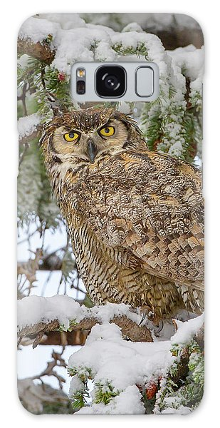 Great Horned Owl In Snow Galaxy Case
