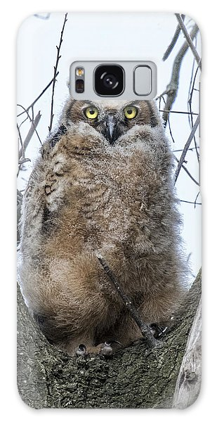 Great Horned Owl Portrait Galaxy Case
