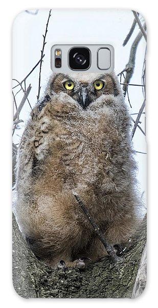 Great Horned Owl Portrait Galaxy Case
