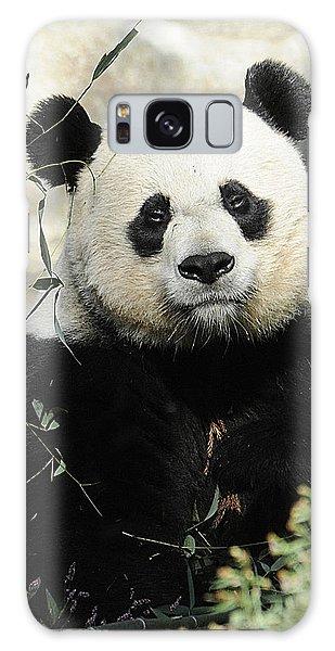 Great Panda II Galaxy Case
