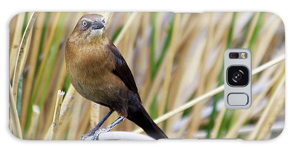 Great-tailed Grackle Galaxy Case