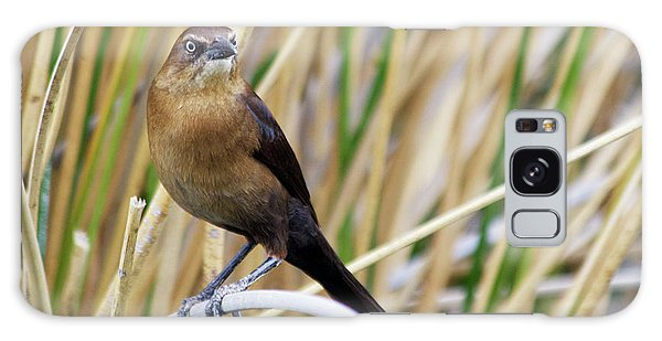 Great-tailed Grackle Galaxy Case by Afrodita Ellerman