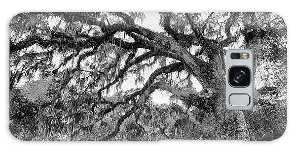Great Tree Galaxy Case