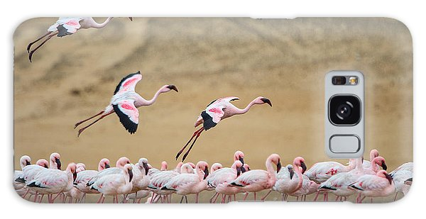 Greater Flamingos Phoenicopterus Galaxy Case by Panoramic Images