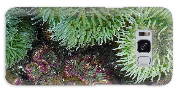 Green And Strawberry Anemonies Galaxy Case