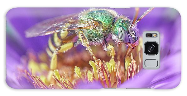 Green Halactid Bee On Purple Aster Galaxy Case