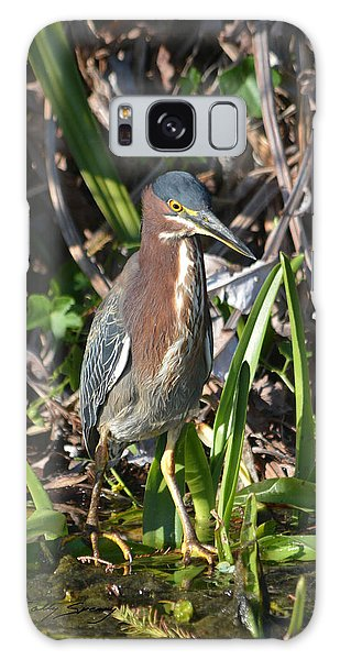 Green Heron Everglades Galaxy Case