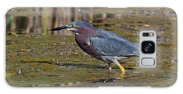 Galaxy Case featuring the photograph Green Heron by Ken Stampfer