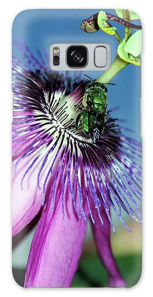 Green Hover Fly On Passion Flower Galaxy Case