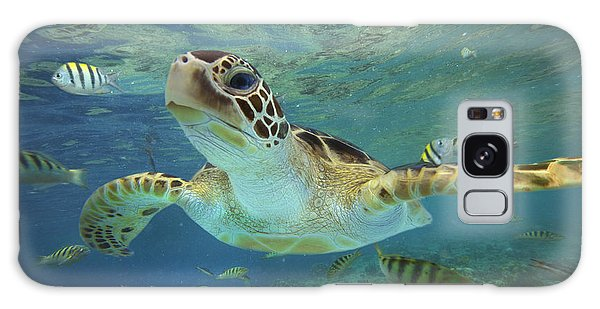 Horizontal Galaxy Case - Green Sea Turtle Chelonia Mydas by Tim Fitzharris