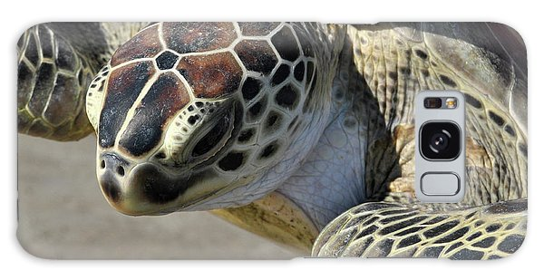 Padre Island National Seashore Galaxy S8 Case - Green Sea Turtle by Wes Hanson