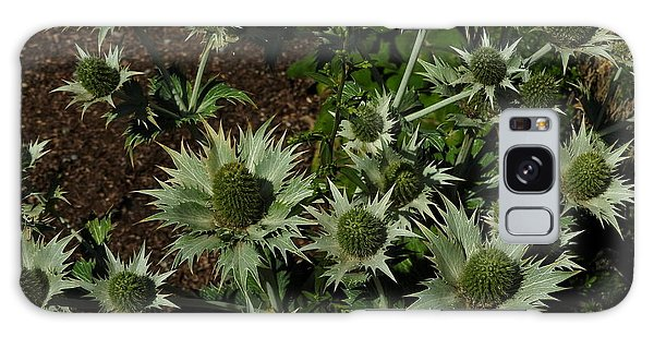 Green Thistles In Botanical Garden Of Bern Galaxy Case