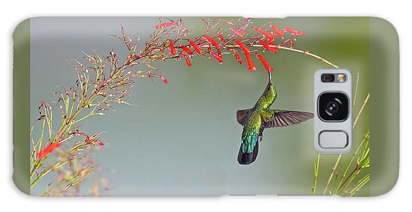 Green-throated Carib Galaxy Case