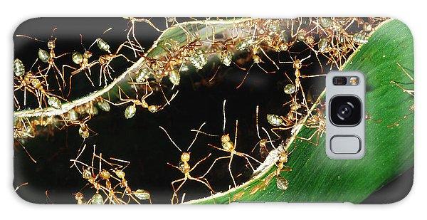 Green Tree Ants Galaxy Case by B. G. Thomson