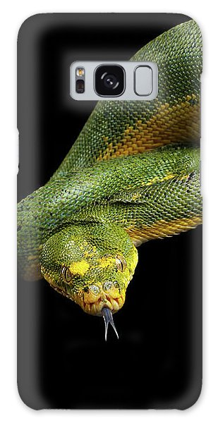 Green Tree Python. Morelia Viridis. Isolated Black Background Galaxy Case by Sergey Taran