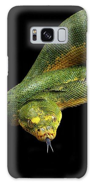 Green Tree Python. Morelia Viridis. Isolated Black Background Galaxy Case