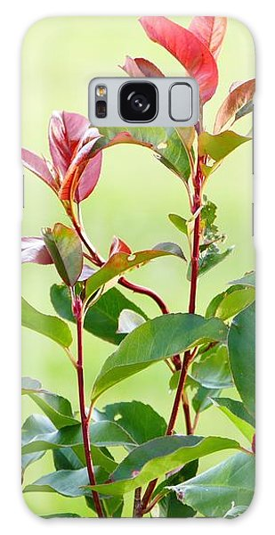 Galaxy Case featuring the photograph Greenery And Red by Ivana Westin