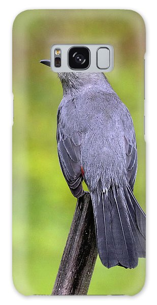Galaxy Case featuring the photograph Grey Catbird by Debbie Stahre