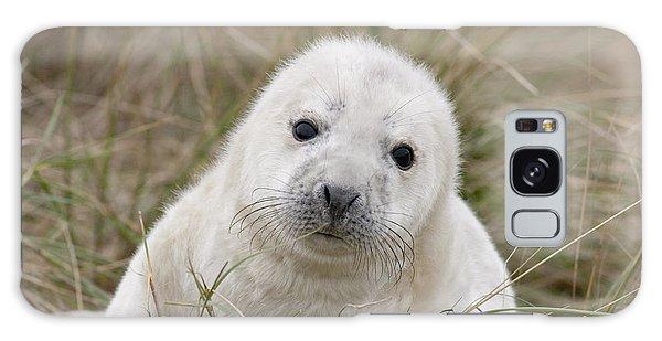 Grey Seal Pup Galaxy Case