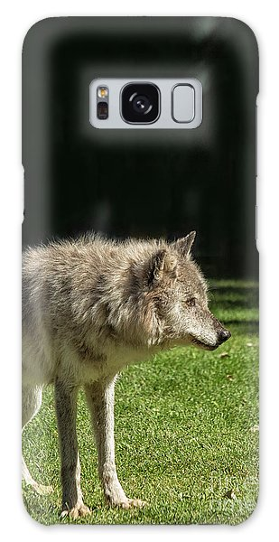 Grey Wolfe In Close Up Galaxy Case by Patricia Hofmeester