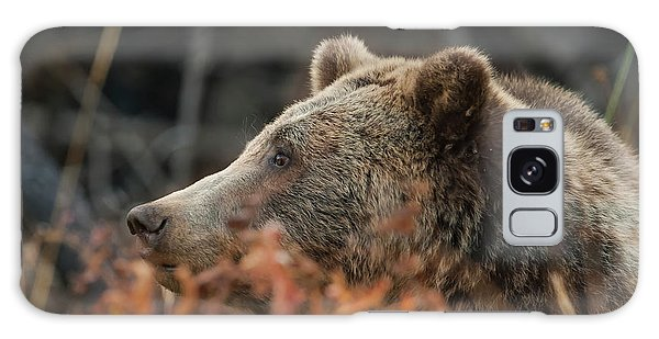 Grizzly Bear Portrait In Fall Galaxy Case