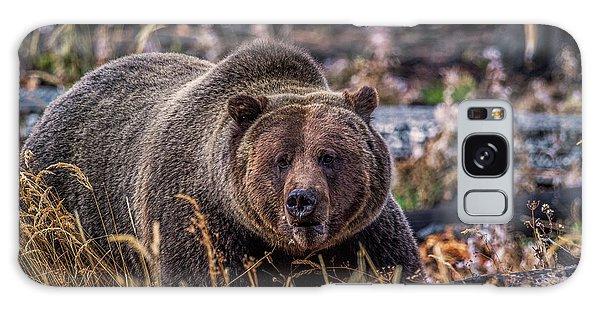 Grizzly Bears Galaxy Case - Grizzly by Paul Freidlund