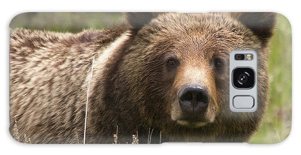 Grizzly Portrait Galaxy Case by Steve Stuller