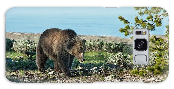 Grizzly Bears Galaxy Case - Grizzly Sow At Yellowstone Lake by Sandra Bronstein