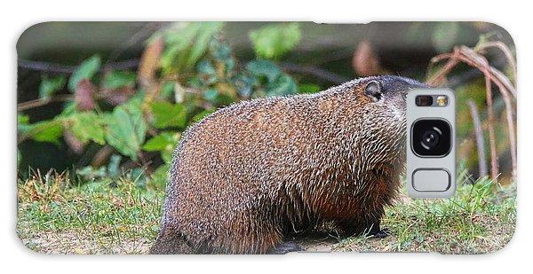Groundhog Galaxy Case - Groundhog  0590 by Jack Schultz