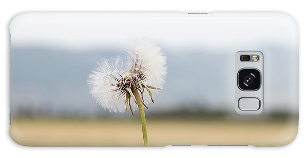 Groundsel In The Wind Galaxy Case