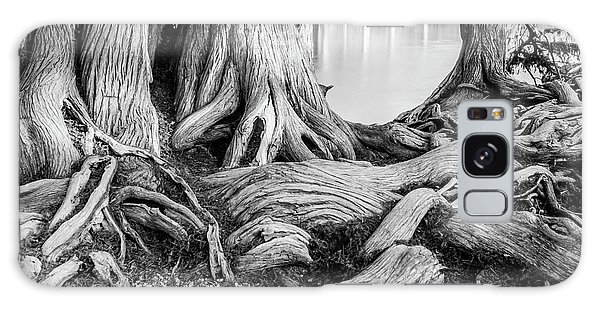 Guadalupe Bald Cypress In Black And White Galaxy Case