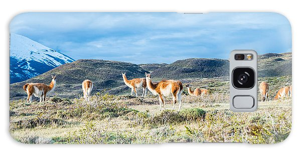 Guanaco In Patagonia Galaxy Case