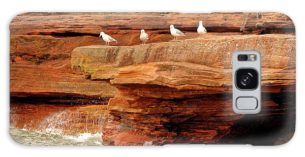 Gulls On Outcropping Galaxy Case