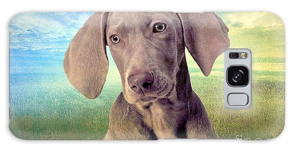 Gunshy Weimaraner Looking For Loving Home Galaxy Case