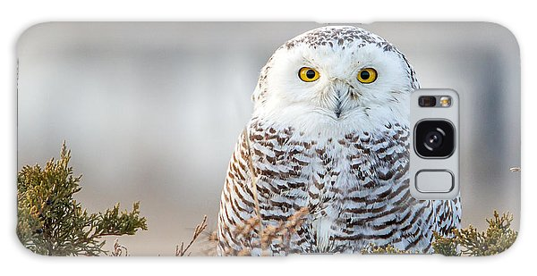 Hampton Beach Nh Snowy Owl Galaxy Case