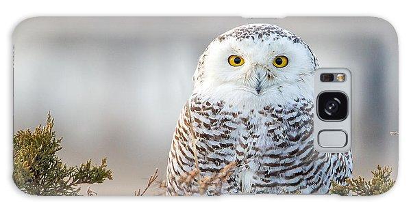 Hampton Beach Nh Snowy Owl Galaxy Case
