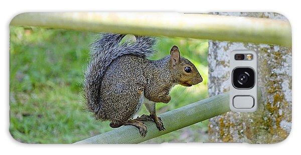 Happy Squirrel Galaxy Case by Kenneth Albin
