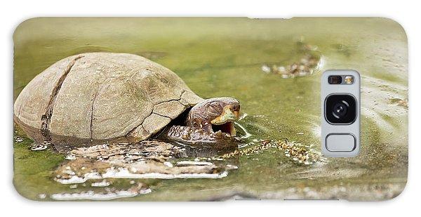 Happy Turtle Galaxy Case
