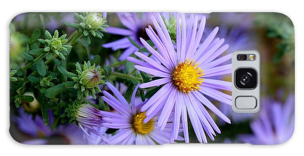 Hardy Blue Aster Flowers Galaxy Case