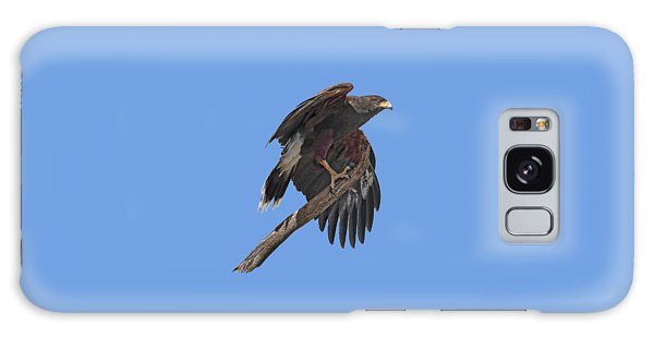 Harris Hawk - Transparent Galaxy Case