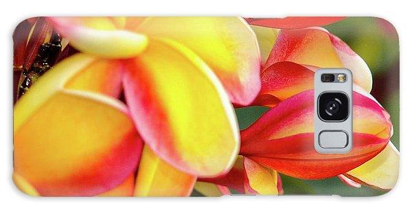 Hawaii Plumeria Flowers In Bloom Galaxy Case