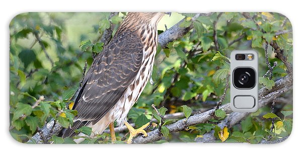 Galaxy Case featuring the photograph Hawk  by AJ Schibig