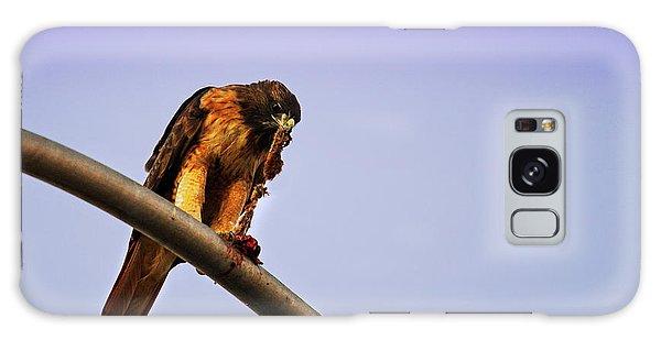 Hawk Eating Galaxy Case
