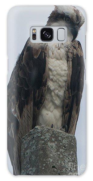 Hawk Facing Down Galaxy Case