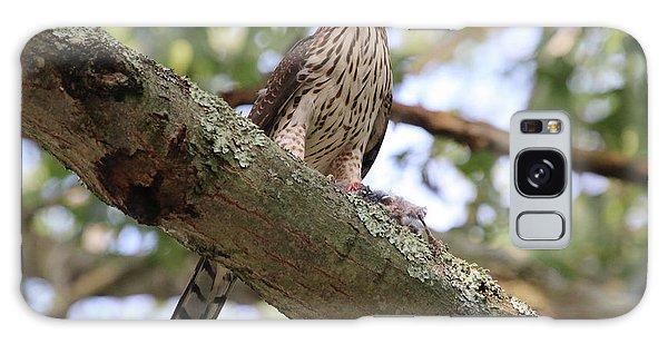 Hawk On A Branch Galaxy Case
