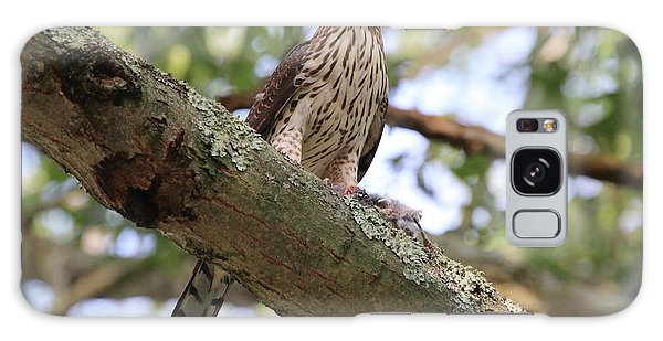 Hawk On A Branch Galaxy Case