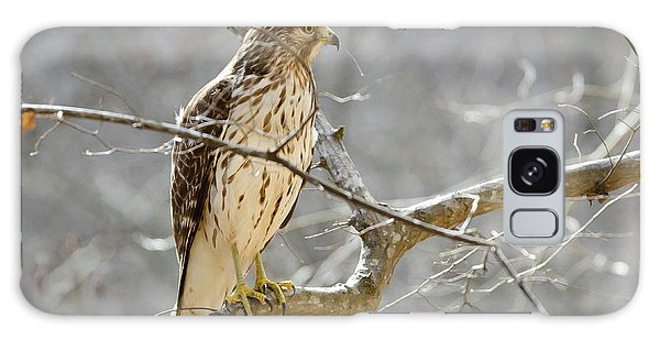 Hawk On Lookout Galaxy Case by George Randy Bass